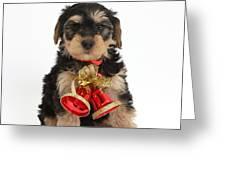 Yorkipoo Pup Wearing Christmas Bells Greeting Card
