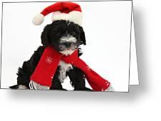 Yorkipoo Pup Wearing Christmas Hat Greeting Card