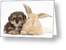 Yorkipoo Pup With Sandy Rabbit Greeting Card