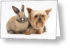 Yorkshire Terrier And Young Rabbit Greeting Card