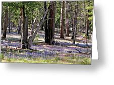Yosemite Lupin Greeting Card