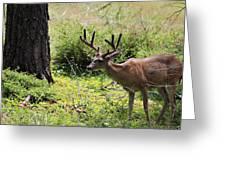 Yosemite Mule Dear Greeting Card