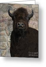 Young Bison Greeting Card