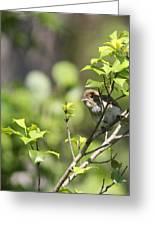 Young Blue Grosbeak Greeting Card