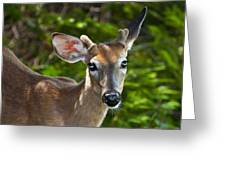 Young Buck 2 Greeting Card