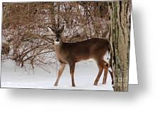Young Buck Greeting Card by Elizabeth Hernandez