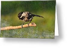 Young Chickadee Greeting Card