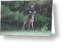 Young Deer Peering Out Of The Woods Greeting Card