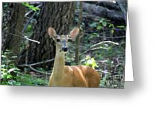 Young Doe At Side Of The Road Greeting Card
