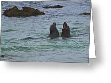 Young Elephant Seals Sparring Greeting Card