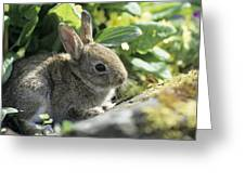 Young European Rabbit Greeting Card