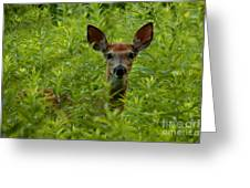 Young Fawn Playing Peek A Boo  Greeting Card