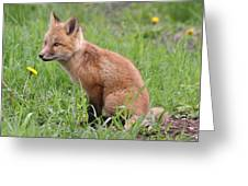 Young Fox Among The Dandelions Greeting Card