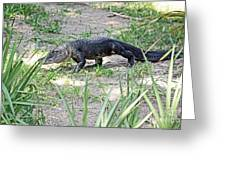 Young Gator On The Move Greeting Card