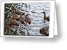 Young Geese Greeting Card