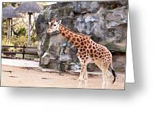 Young Giraffe Greeting Card