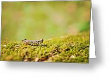 Young Grasshopper Greeting Card
