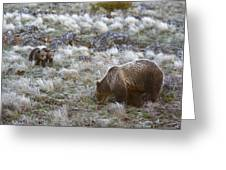 Young Grizzly Cubs Play As Their Mother Greeting Card