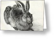 Young Hare, By Durer Greeting Card