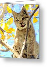 Young Lynx In A Tree Greeting Card