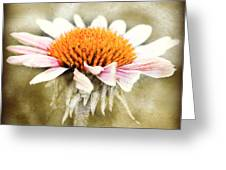 Young Petals Greeting Card