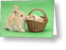 Young Rabbit With Baby Guinea Pig Greeting Card