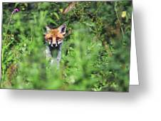 Young Red Fox Greeting Card