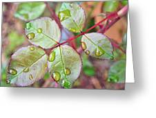 Young Rose Leaves Greeting Card