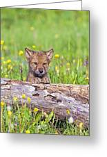 Young Wolf Cub Peering Over Log Greeting Card