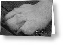Young Wolf Paw Greeting Card