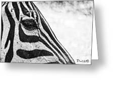 You've Got Zebra Eyes Greeting Card