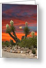 Yucca Blooming Sunset-moonset Greeting Card