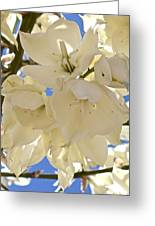 Yucca Flowers 3 Greeting Card
