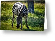 Zebra At Close Range Greeting Card by Kelly Rader