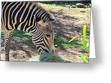 Zebra At Lunch Greeting Card