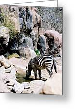Zebra At Water Hole Greeting Card