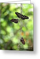 Zebra Butterflies Hanging Out Greeting Card