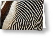 Zebra Caboose Greeting Card