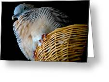 Zebra Dove From Above Greeting Card