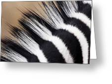 Zebra Equus Quagga Mane, Khama Rhino Greeting Card