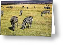 Zebra Grub Greeting Card