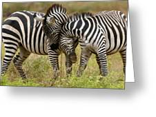 Zebra Hug Greeting Card