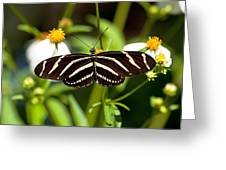 Zebra Longwing And Flowers Greeting Card