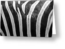 Zebra Print Greeting Card