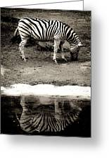 Zebra Reflection  Greeting Card