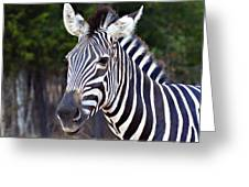 Zebra Symmetry  Greeting Card