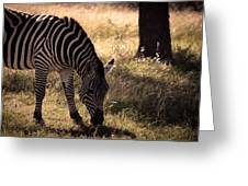 Zebra Take One Greeting Card