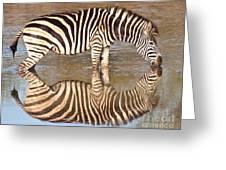 Zebra Times Two Greeting Card
