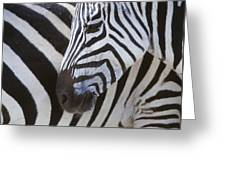 Zebras Close Up Greeting Card