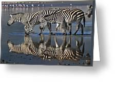Zebras Drinking Ngorongoro Crater Tanzania Greeting Card